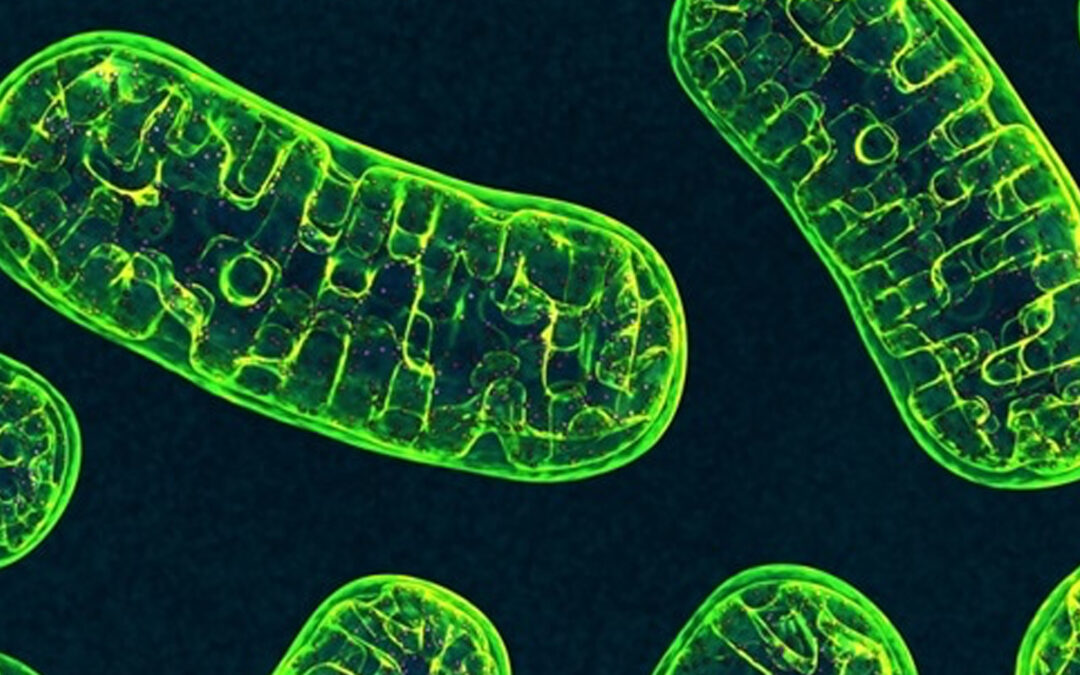 Protecting Mitochondria Key to Health & Longevity