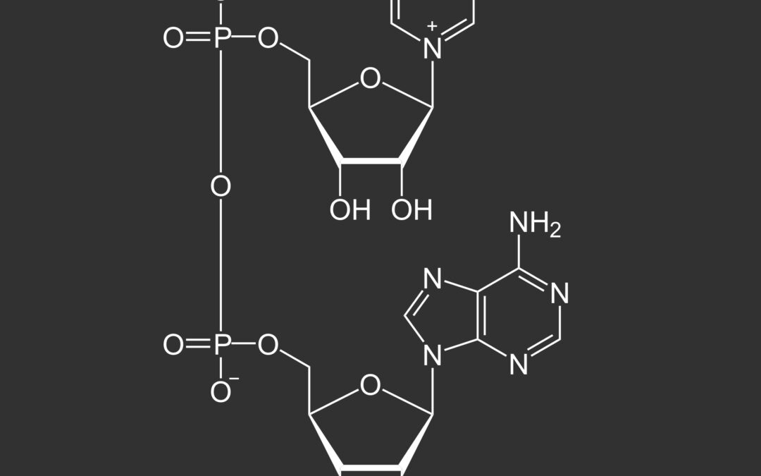 NAD, The molecule of life